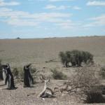 Die größte Kolonie von Magellan Pinguinen der Welt
