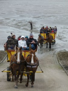 InselNeuwerk-Wattfahrt mit der Kutsche
