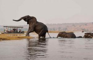 Botswanas Lodges elefanten