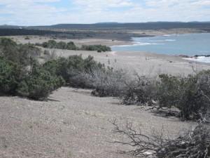 Punta Tombo Chubut - Die Küste
