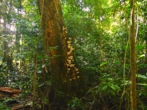 Floresta Nacional do Tapajos
