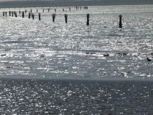 InselNeuwerk-Weg durch das Watt-Pricken