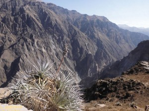Canyon de Colca schlucht