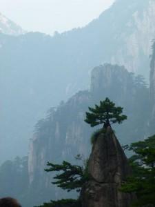 einsame Kiefer Huang Shan